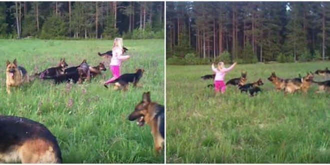 O fetita se afla pe o pajiste inconjurata de caini lupi. Ce se intampla cand micuta ridica mainile spre cer