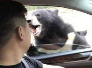 A vizitat o rezervație naturală, însă a făcut imprudența de-a deschide geamul. Ce a urmat